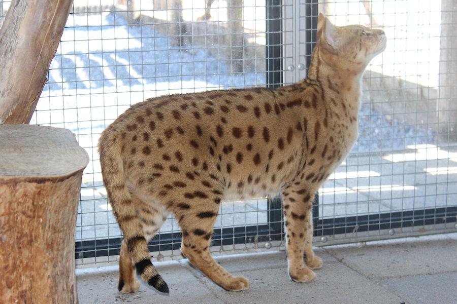 Savannah Kat Demi 2