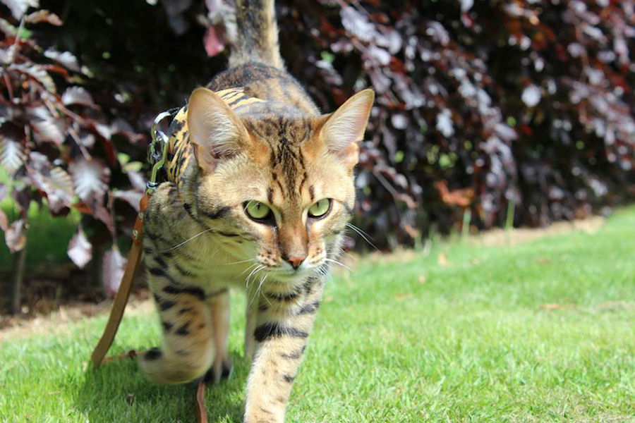 Savannah Katten